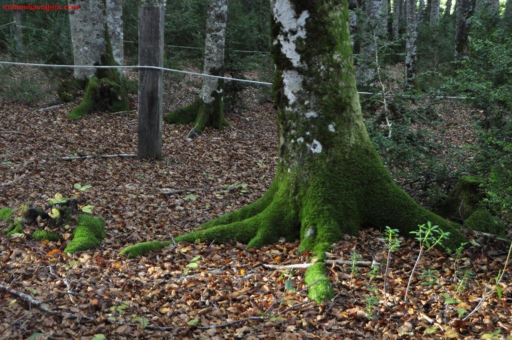 Bosque de los Sentidos
