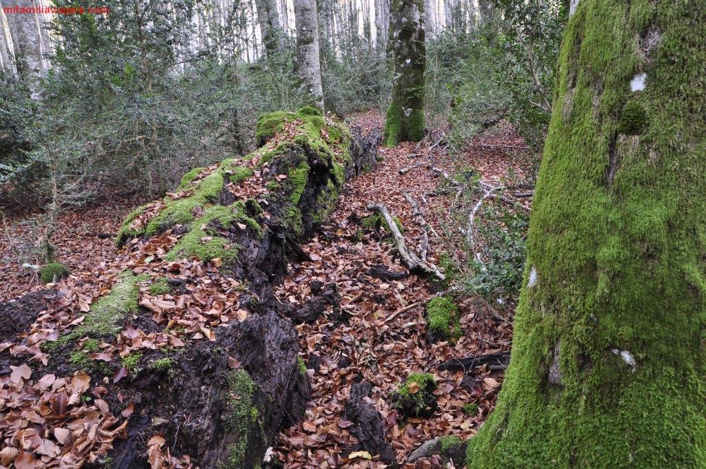 Musgo y hojas