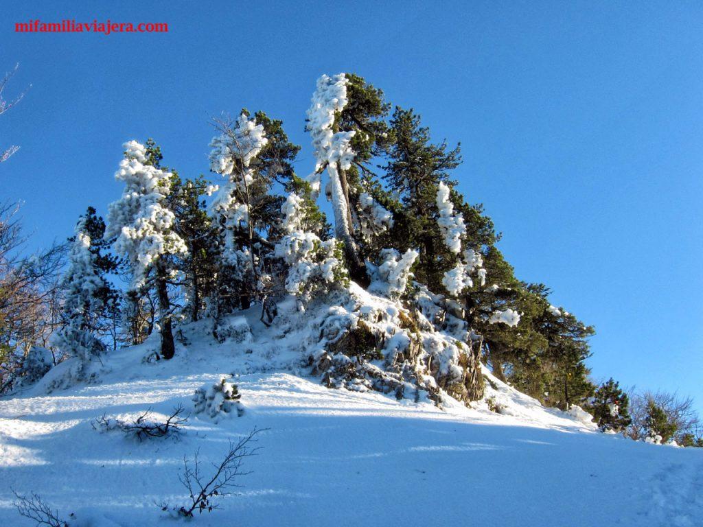 La arboleda se cubre de nieve