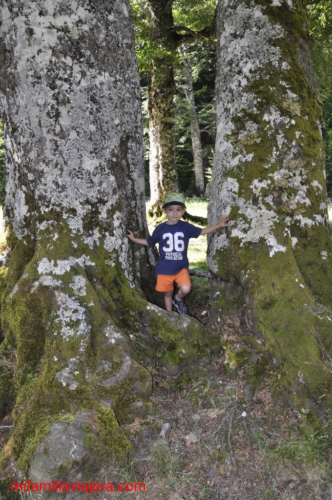 Bosque Gamueta