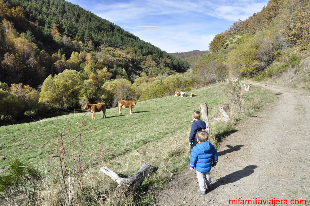 Ruta Hayedo de Monte Ranedo (León)
