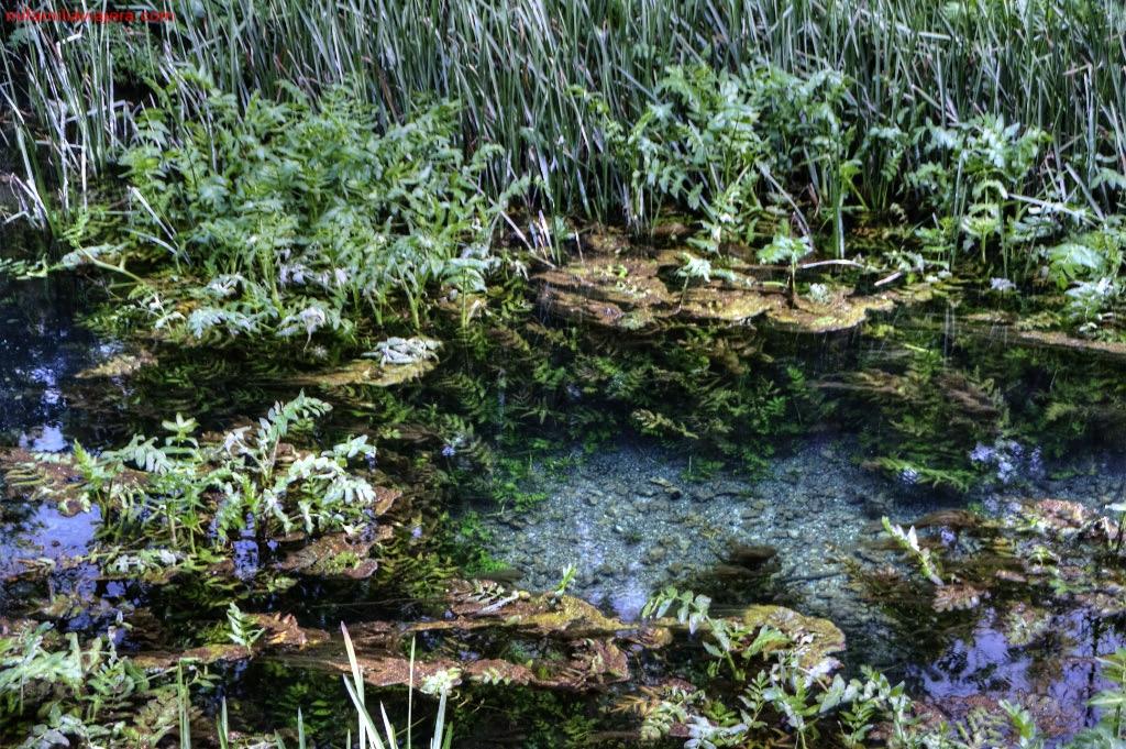 Aguas cristalinas del Río Abión