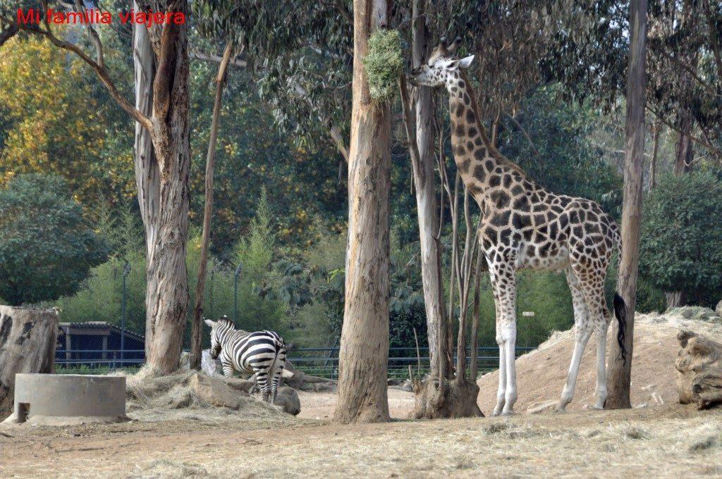 Zoo Santo Ignacio, Oporto, Portugal