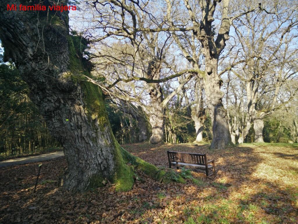 Monumento Natural de la Carbayera del Tragamón
