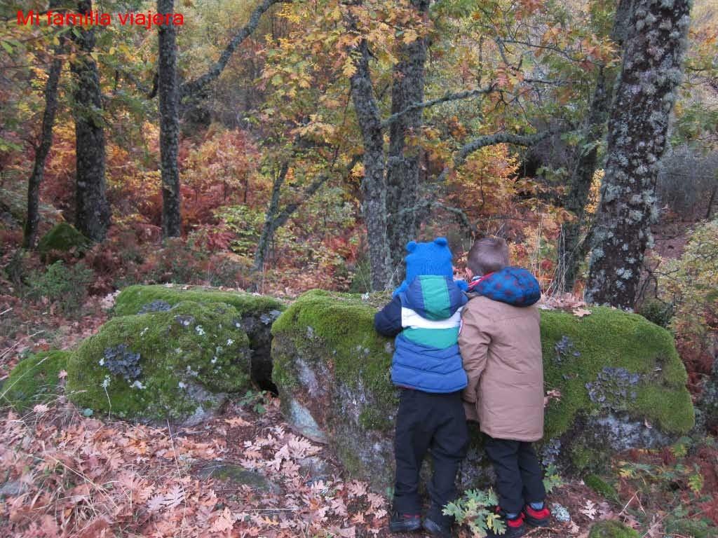 El musgo cubre las rocas