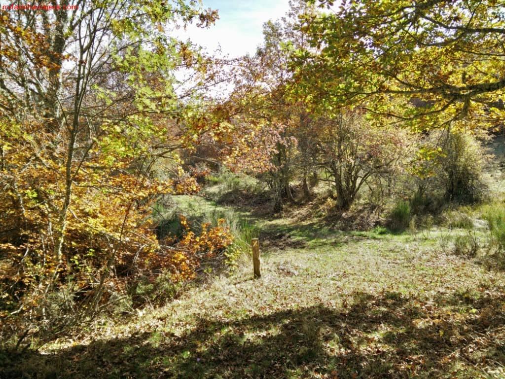 Bosque de Matapiojos, León, Picos de Europa
