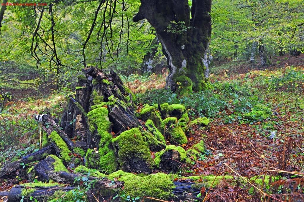 Embalse de Irabia, Selva de Irati, Navarra