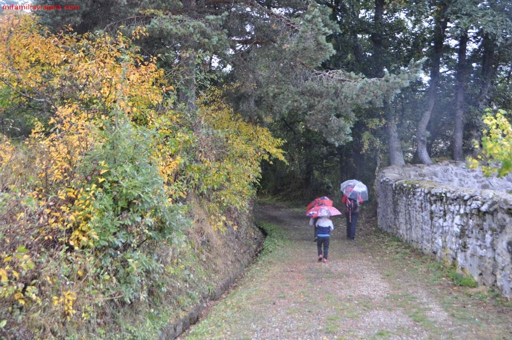 Senda del Bosque Fósil, Verdeña, Parque Natural de Fuentes Carrionas y Fuente Cobre, Palencia
