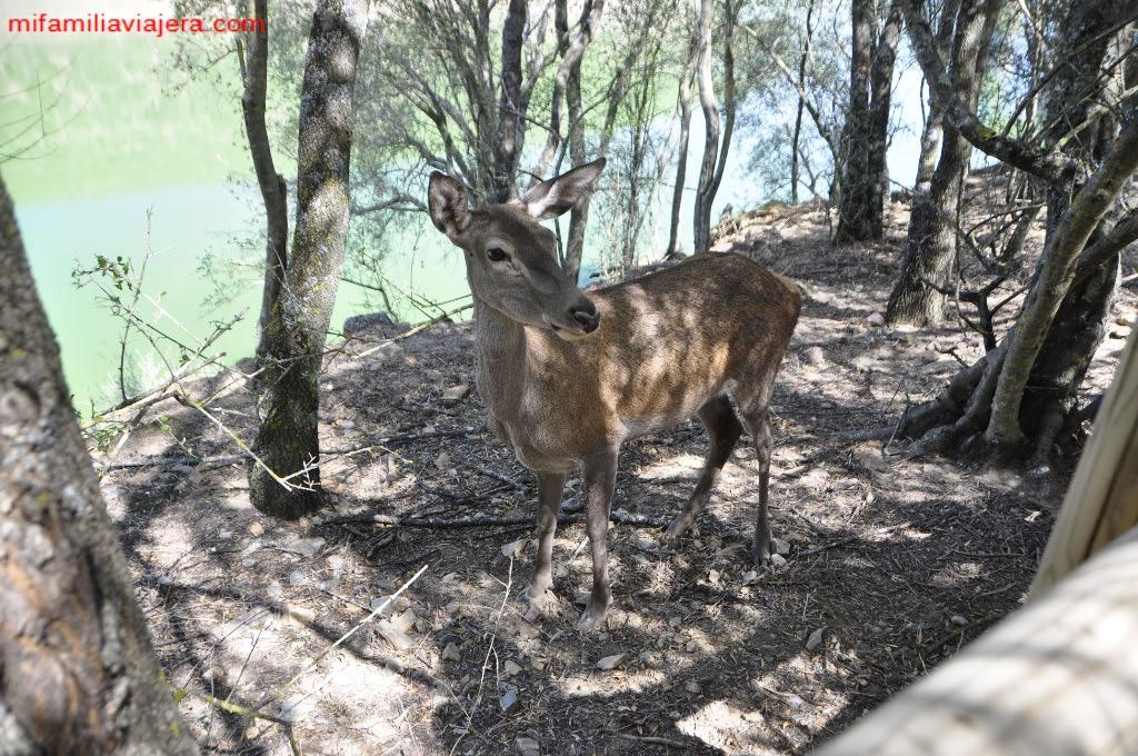 Ciervo en Monfragüe