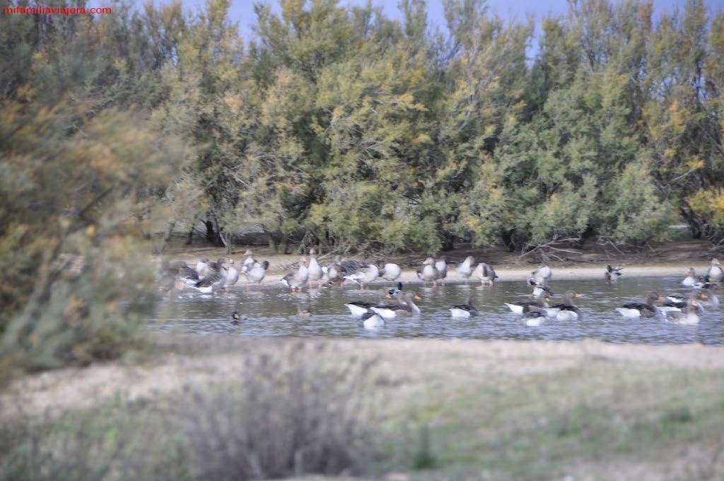 Reserva Natural de las Laguanas de Villafáfila, Zamora