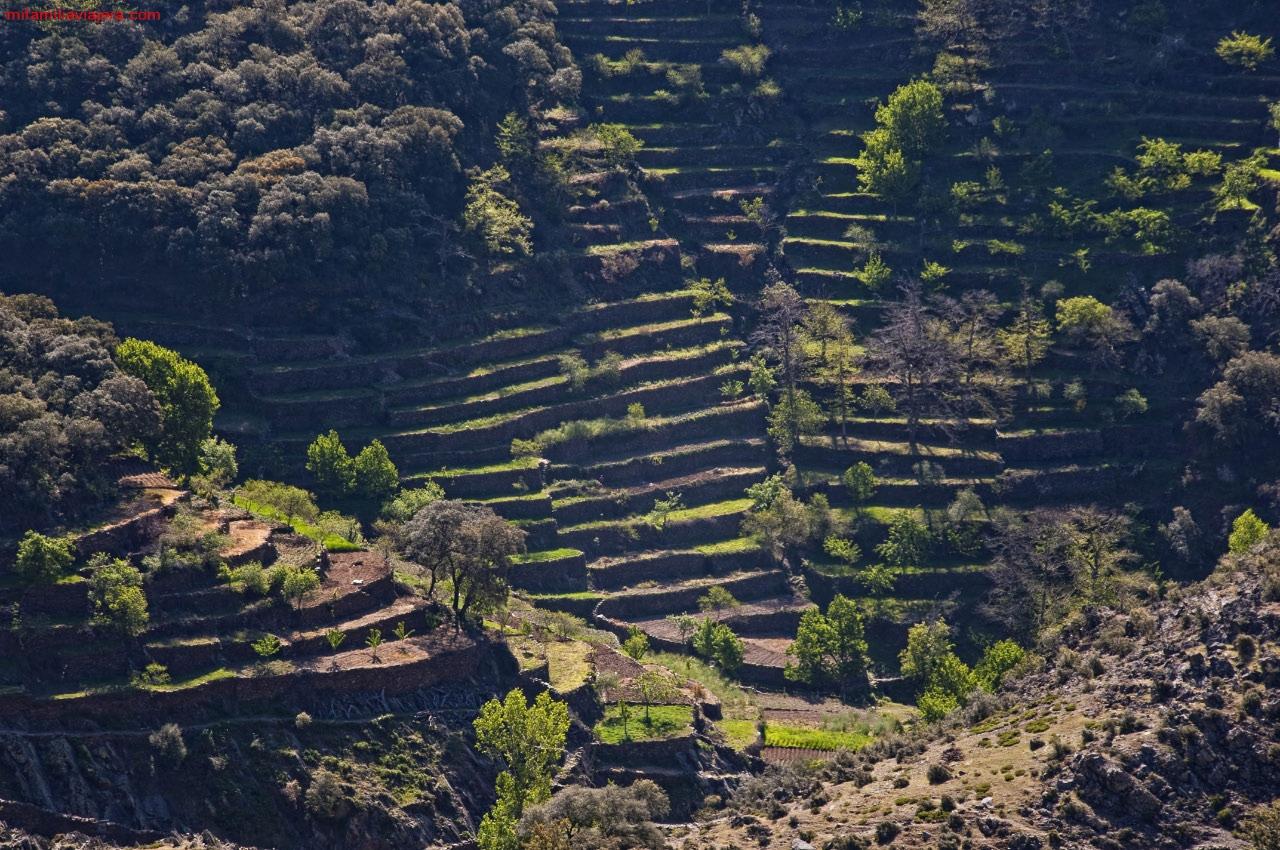 Terrazas de El Gasco