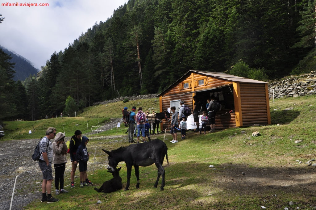 Asociación del Burro de los Pirineos