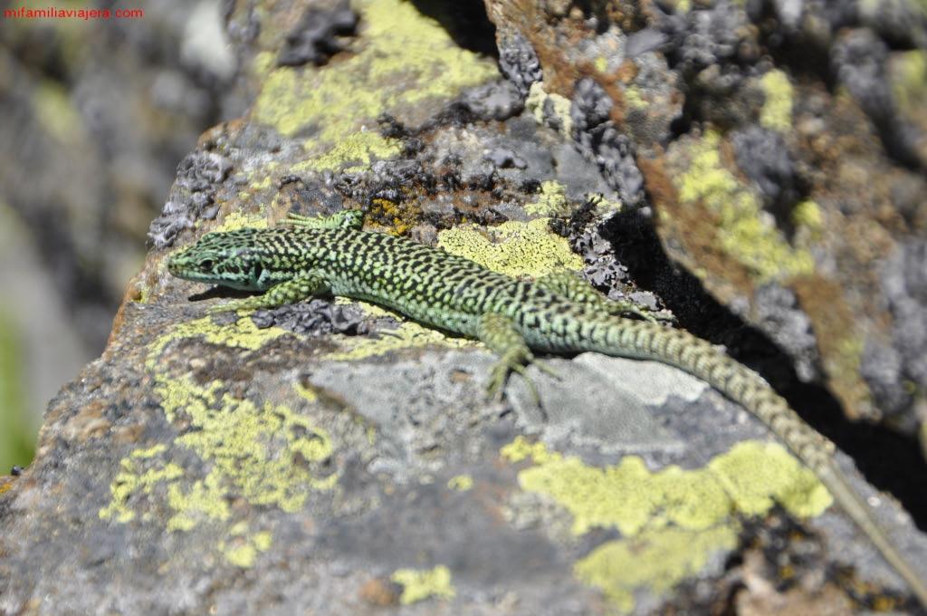 Reptiles de la laguna