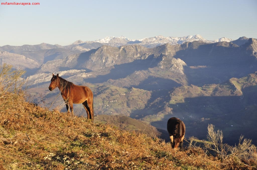 Caballos en el trayecto del Pico Tres Concejos