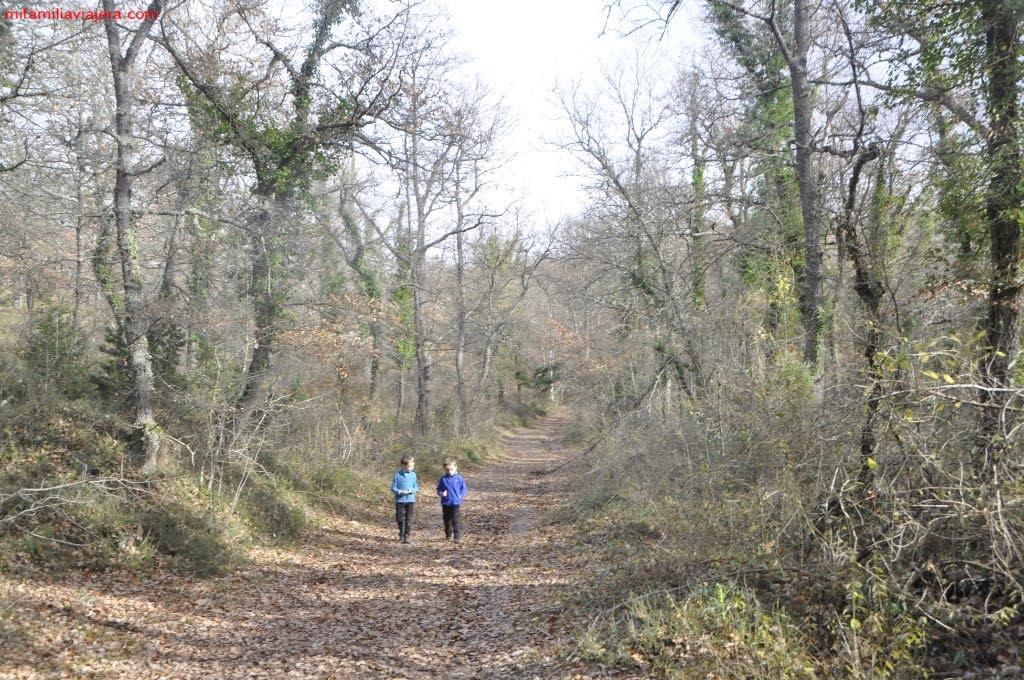 Bosque de hayas y robles