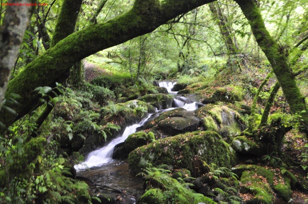 Cauce del Arroyo de Armenteira