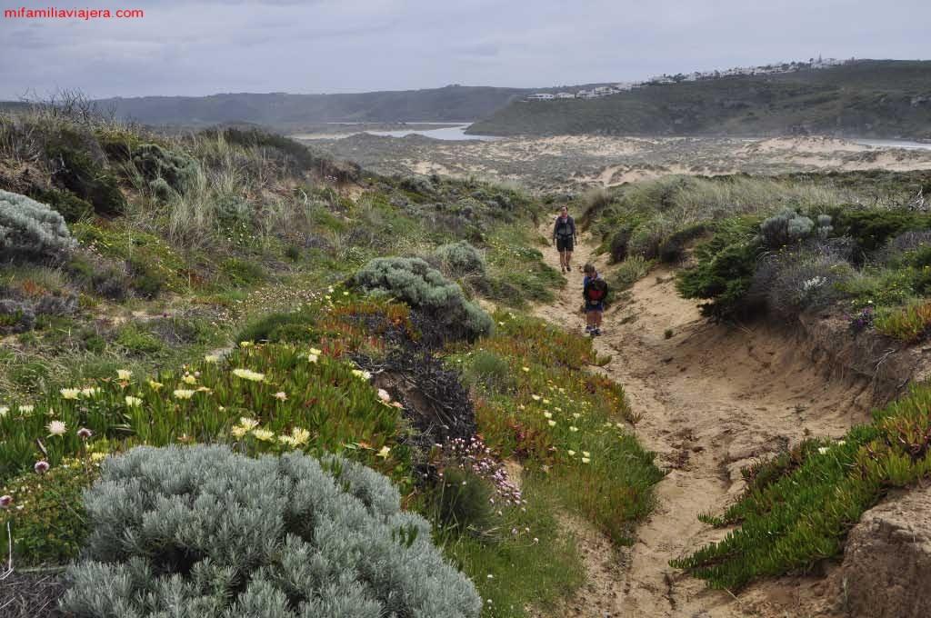 Dunas de acceso a la playa de Amoreira
